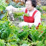 コリアンキッチンあんじゅ無農薬野菜